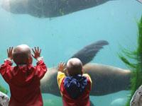 Feriendörfer in der Nähe eines Zoos
